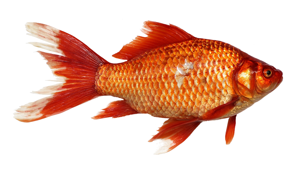 Creating Content to Capture the Attention of Goldfish