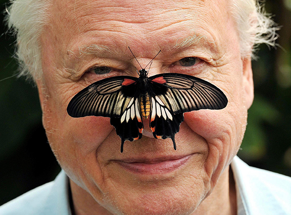 Chloe Hockham loves butterflies