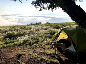 camping with julep the australian shepherd mix