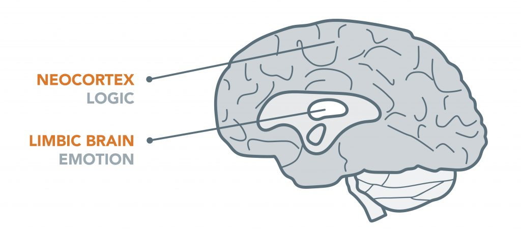 neocortex (logic) vs. limbic brain (emotion)